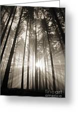 Light Through Forest Greeting Card