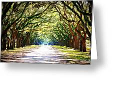 Light Through Live Oak Lane Greeting Card