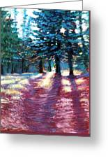 Light Through The Pines Greeting Card