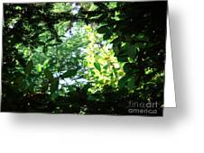 Light Through Trees Greeting Card