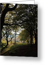 Light Through Woodland Darkness Greeting Card