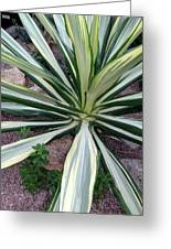 Agave Fourcroydes Greeting Card