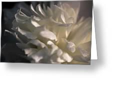 Light Wet Flower Greeting Card