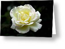 Light Yellow Rose 1 Greeting Card