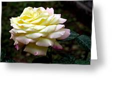 Light Yellow Rose 2 Greeting Card