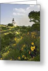 Lighthouse Daisies Greeting Card