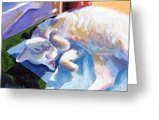 Lightly Napping Greeting Card by Pat Burns