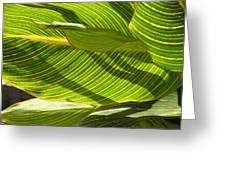 Lightplay Through The Leaves 3 Greeting Card
