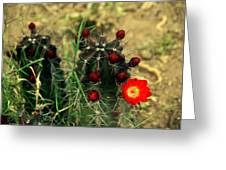 Like A Little Red Star Greeting Card