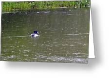 Like Rain Off A Ducks Back Greeting Card