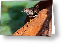 Lil Bird Greeting Card