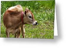 Lil Bull Greeting Card