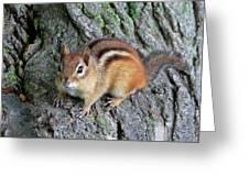 Lil Chipmunk Greeting Card
