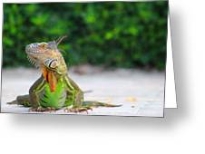 Lil Iguana Greeting Card