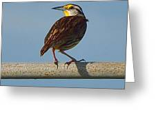 Lil Meadowlark Greeting Card