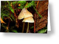 Lil' Shrooms Greeting Card by Scott Gould