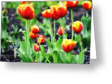 Lil Tulips Greeting Card