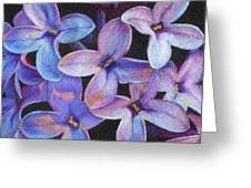 Lilac 3 Greeting Card