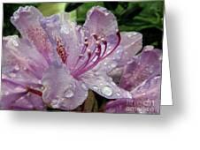 Lilac Azalea Greeting Card
