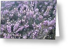 Lilac Bells Greeting Card