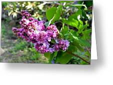 Lilac Branch Greeting Card