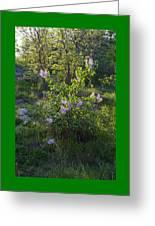 Lilac In Sunshine Greeting Card