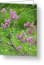 Lilac In The Spring Meadow Greeting Card