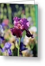 Lilac Iris In Bloom Greeting Card