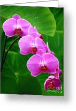 Lilac Orchid Beauties Greeting Card