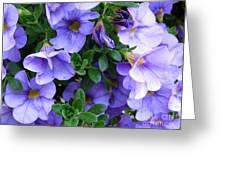 Lilac Petunias Greeting Card