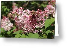 Lilac Pink Greeting Card