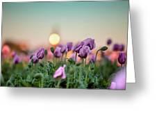 Lilac Poppy Flowers Greeting Card