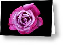 Lilac Rose Greeting Card