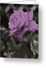 Lilac Rose Greeting Card by Vijay Sharon Govender