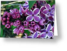 Lilac Greeting Card