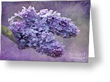 Lilac Spring Greeting Card