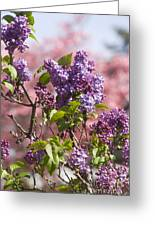 Lilacs And Dogwoods Greeting Card