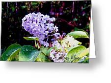 Lilacs Greeting Card by Deleas Kilgore