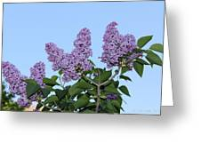 Lilacs In The Sky Greeting Card
