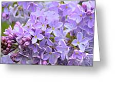 Lilacs-lavender Lovely  Greeting Card