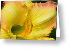 Lilied Curves Greeting Card