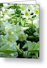 Lilies 11 Greeting Card