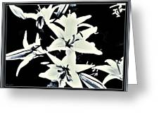 Lilies All Aglow Greeting Card