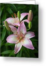 Lilies And Raindrops Greeting Card