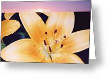 Lilies And Sky 3 Greeting Card