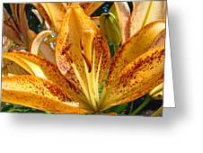 Lilies Art Prints Orange Lily Flowers 2 Gilcee Prints Baslee Troutman Greeting Card