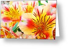 Lilies Art Prints Pink Yellow Lily Flowers 1 Giclee Prints Baslee Troutman Greeting Card