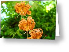 Lilies Art Tiger Lily Flowers Canvas Prints Floral Baslee Troutman Greeting Card