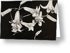 Lilies Black And White Greeting Card by Elizabeth Lane