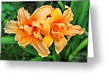 Lilies Collection - 1 Greeting Card